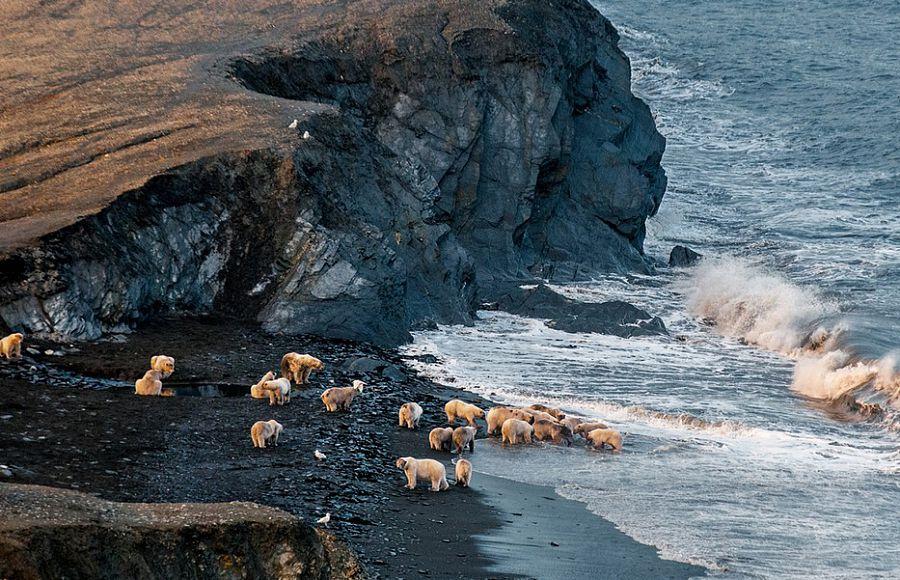 Фото: nat-geo.ru. Остров Врангеля