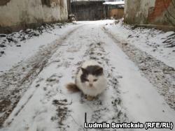 Кошка Пудя – последний житель дома Рериха